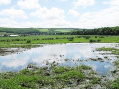 Jun 2010 Wetland Scrape Waders spring